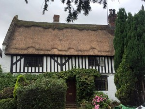 Moss Removal thatched roof